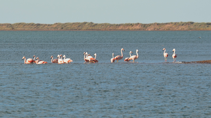 FLAMINGOS_DS_0618
