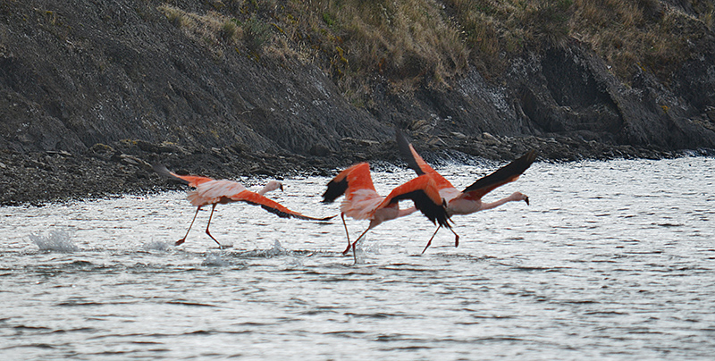 FLAMINGOS_DS_0429